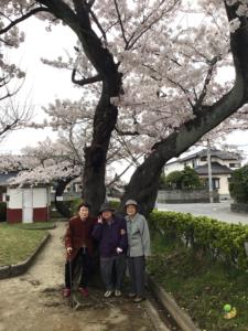 神社の桜も満開。