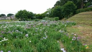 花花day